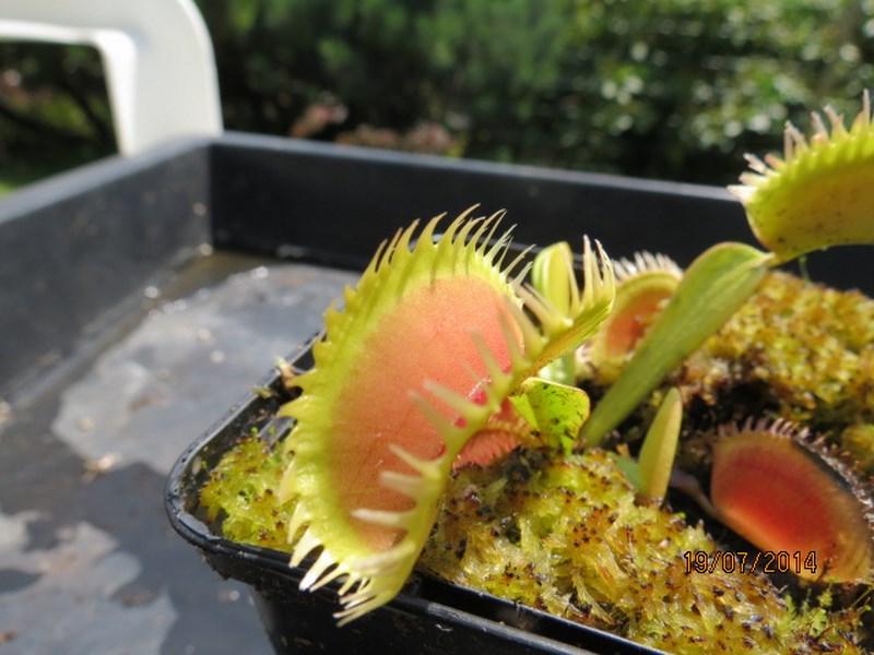 Les plantes à davo68 2014 Img_0053
