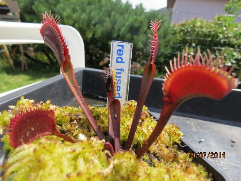 Les plantes à davo68 2014 Img_0059