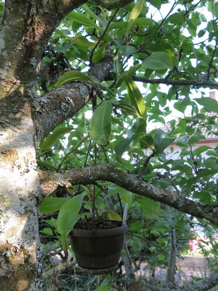 Les plantes à davo68 2014 Img_0111