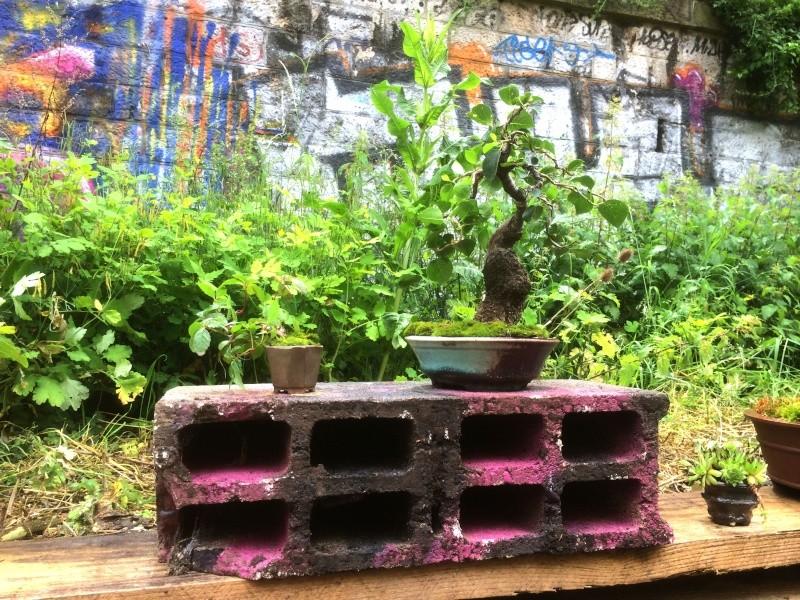 Urban bonsaïs Img_1010