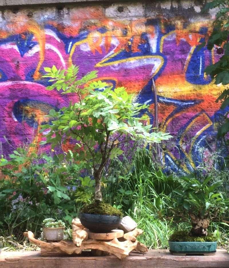 Urban bonsaïs Img_1012