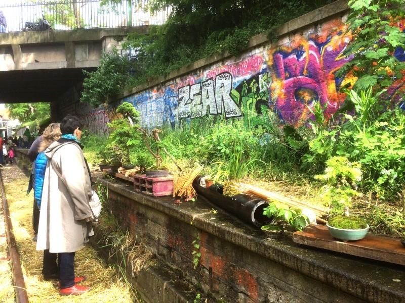 Urban bonsaïs Img_1110