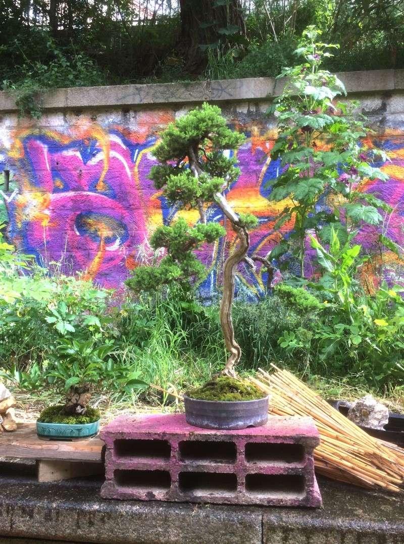 Urban bonsaïs Img_1111