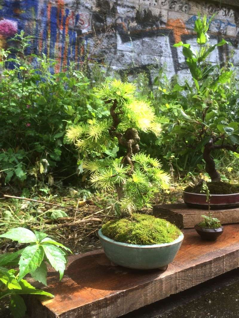 Urban bonsaïs Img_1112