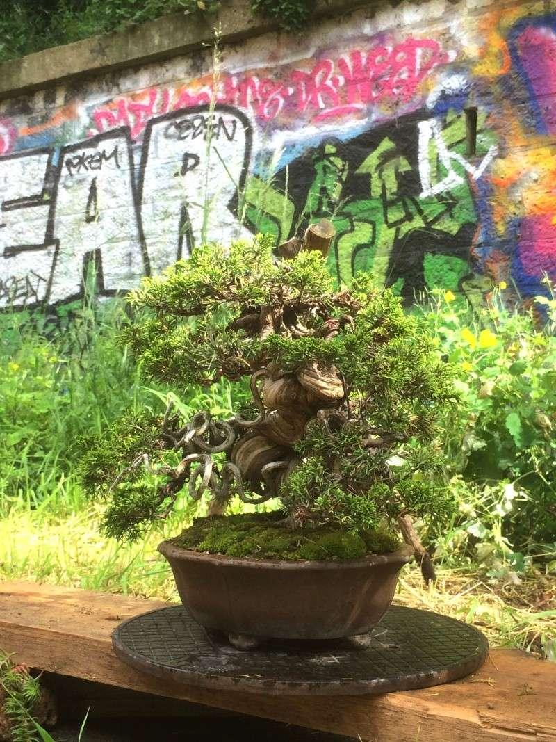 Urban bonsaïs Img_1113