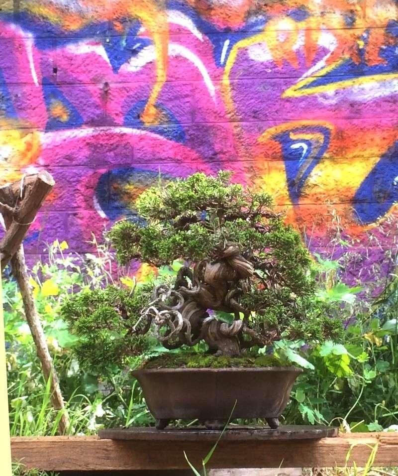 Urban bonsaïs Img_1114