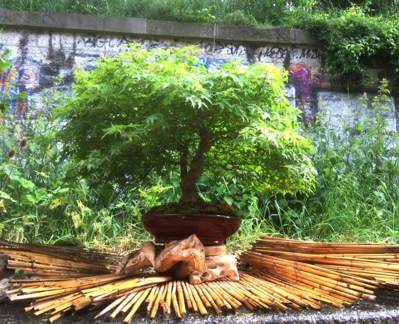 Urban bonsaïs Img_1116