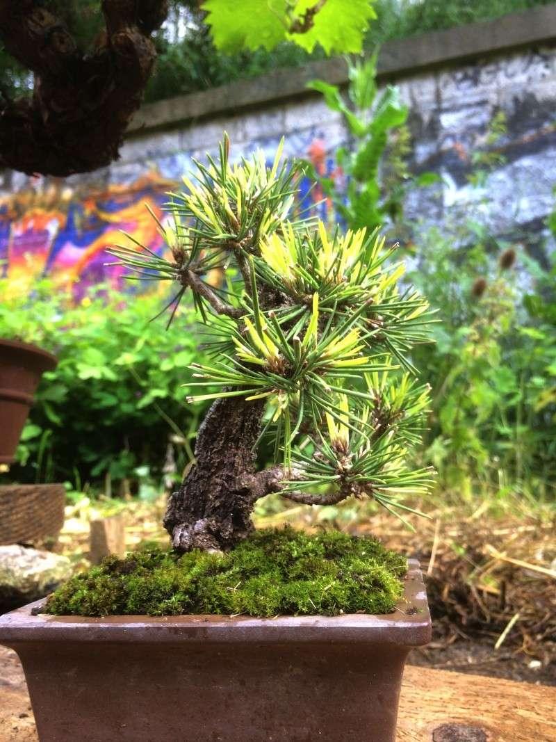 Urban bonsaïs Img_1117