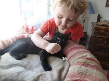 Jack, chaton mâle noir né le 19/04/2014 01010