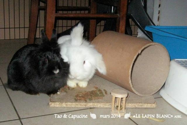 Lapins à l'adoption (Association Le Lapin Blanc) 17436910