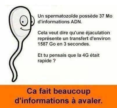 Transfert de données....! Sperma10