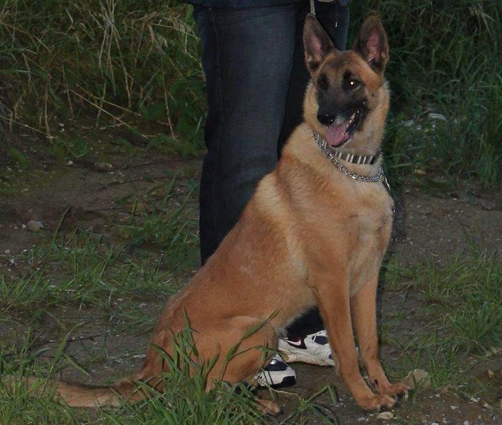 Demande d'assistance - Disparition de mon chien 14855210