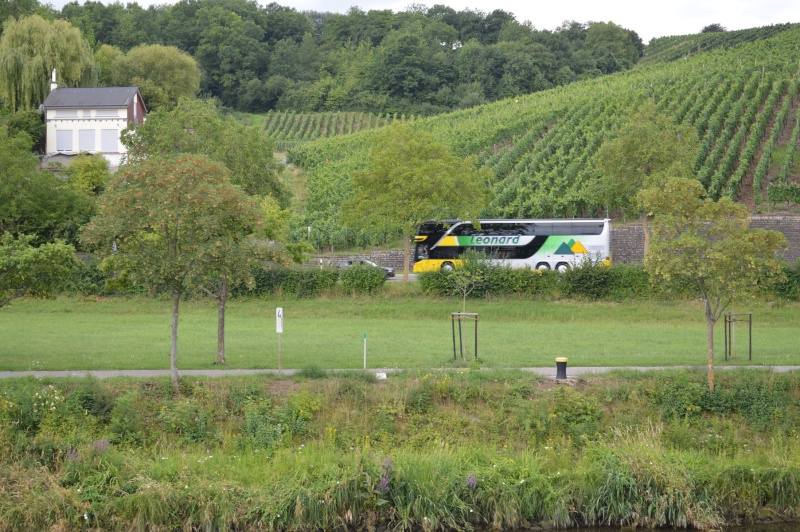 Excursion en moselle luxembourgeoise (21.07.2014) - Page 4 Mosell63