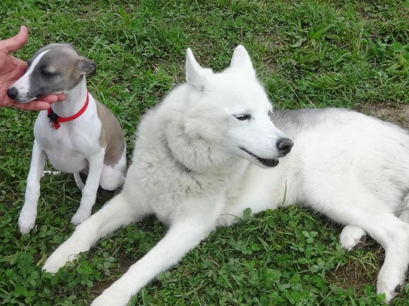 Saskia et Jiro, suite De_ann10