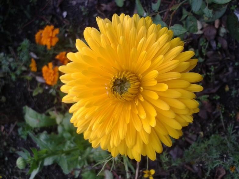 Les fleurs de nos jardins Pforum10