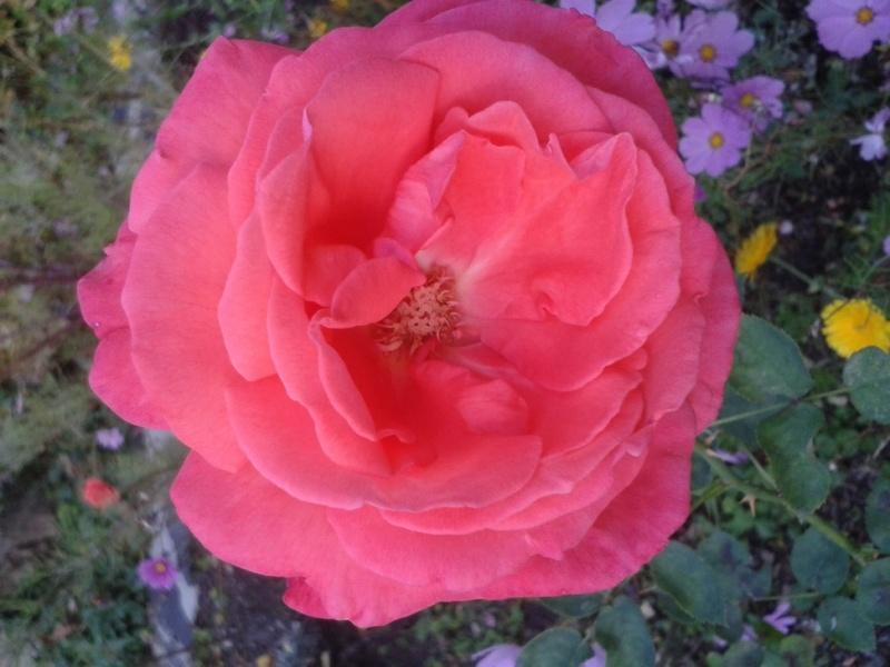 Les fleurs de nos jardins Pforum11