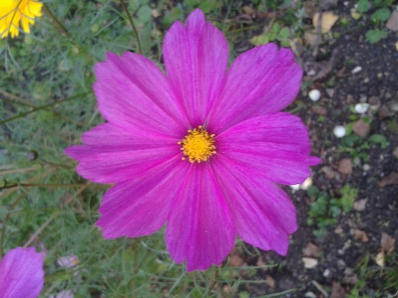 Les fleurs de nos jardins Pforum12