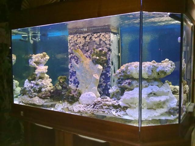 nouvel aquarium eau de mer 11012010