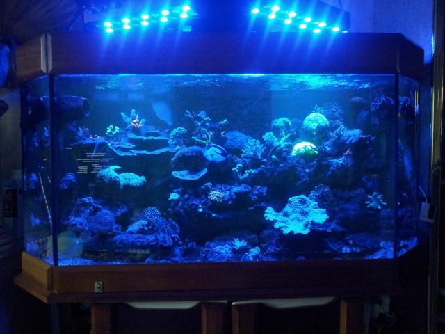 nouvel aquarium eau de mer - Page 9 20120810