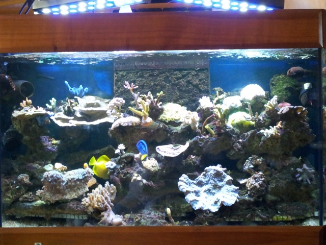 nouvel aquarium eau de mer - Page 9 20120911