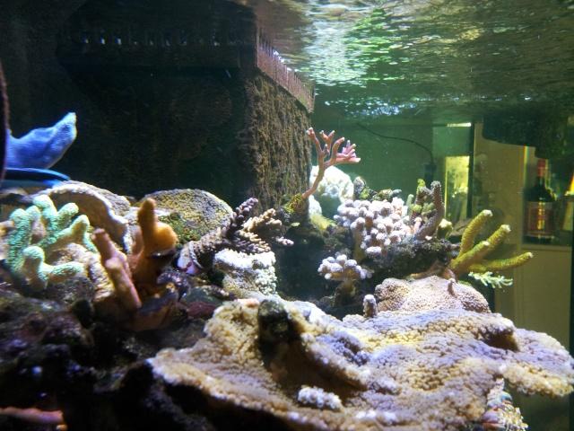 nouvel aquarium eau de mer - Page 9 20120912