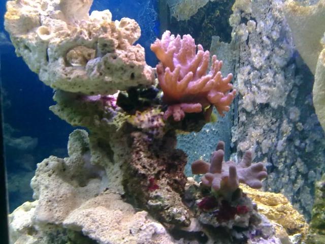 nouvel aquarium eau de mer 22012010
