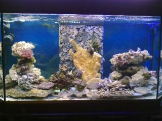 nouvel aquarium eau de mer 22012014