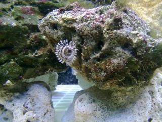 nouvel aquarium eau de mer 22012015
