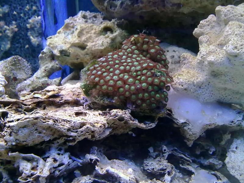 nouvel aquarium eau de mer 22012019