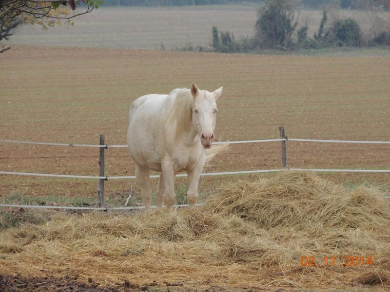 Les chevaux de l'Appaloosa IJ Farm - Page 4 00413