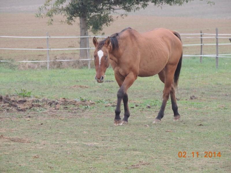 Les chevaux de l'Appaloosa IJ Farm - Page 4 00613