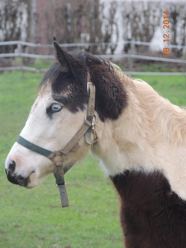 Les chevaux de l'Appaloosa IJ Farm - Page 4 00614