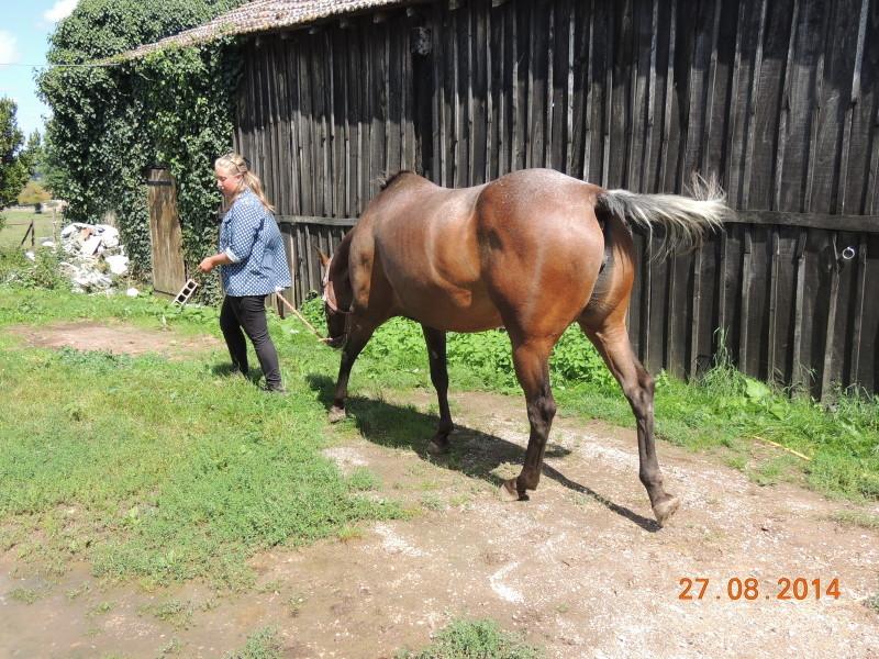 Les chevaux de l'Appaloosa IJ Farm - Page 3 00810