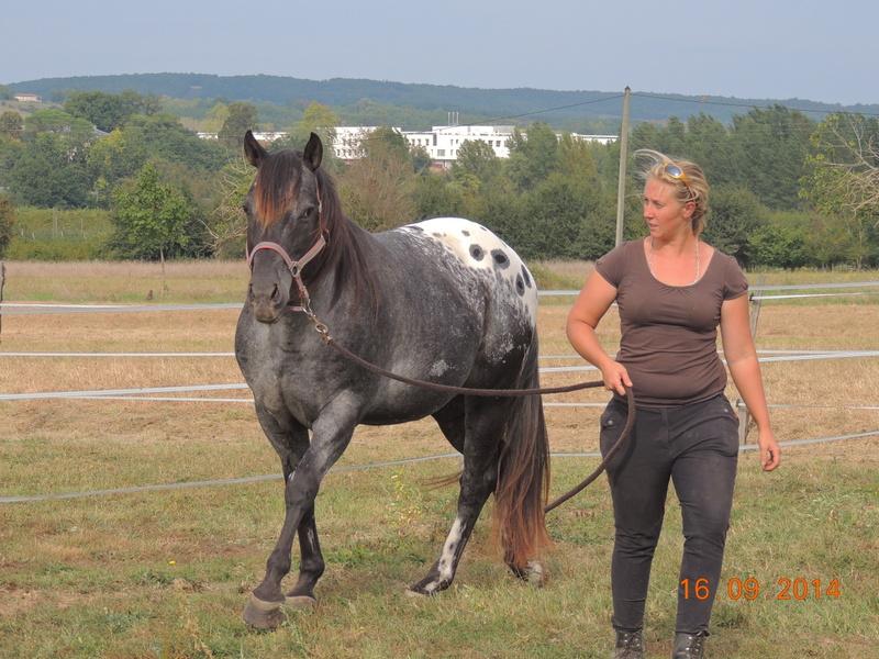 Les chevaux de l'Appaloosa IJ Farm - Page 3 00811