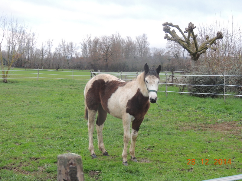 Les chevaux de l'Appaloosa IJ Farm - Page 4 00813
