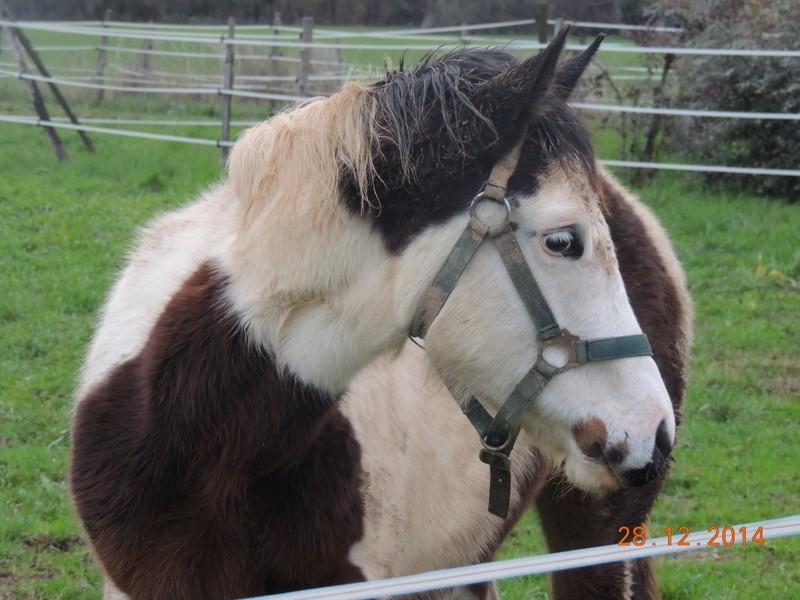 Les chevaux de l'Appaloosa IJ Farm - Page 4 00913