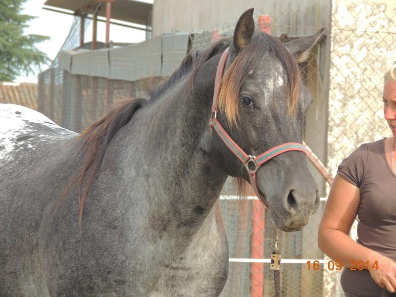 Les chevaux de l'Appaloosa IJ Farm - Page 3 01012