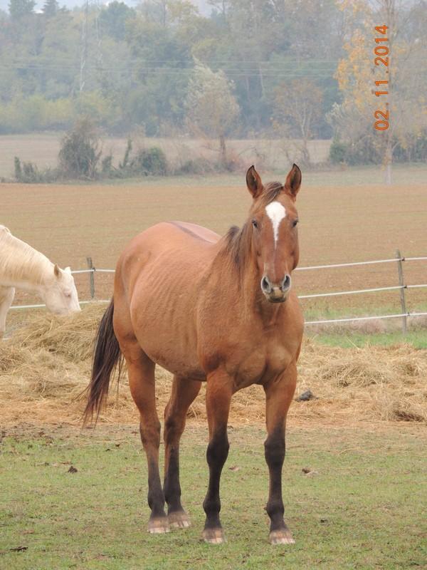 Les chevaux de l'Appaloosa IJ Farm - Page 4 01110