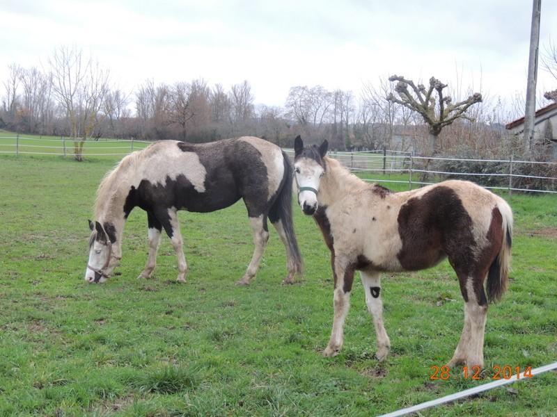 Les chevaux de l'Appaloosa IJ Farm - Page 4 01111
