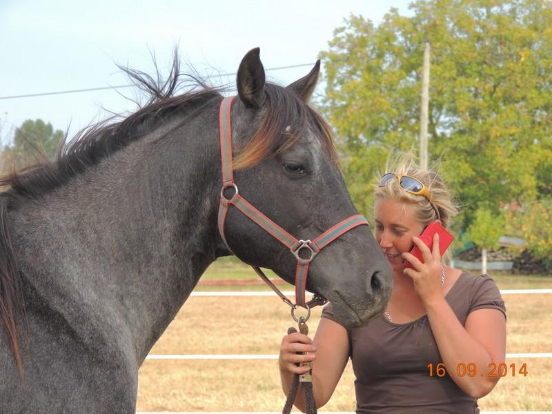 Les chevaux de l'Appaloosa IJ Farm - Page 3 01212