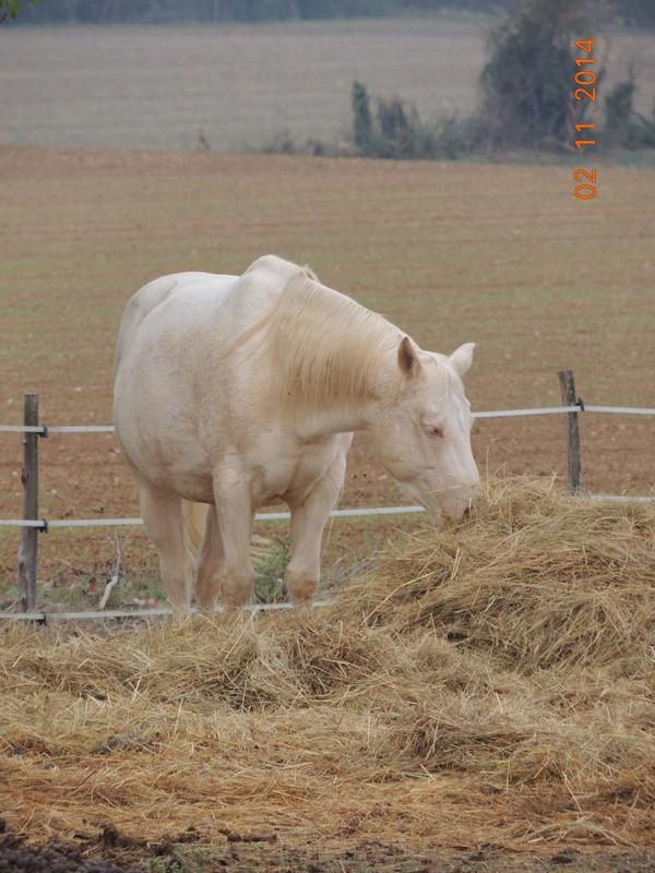 Les chevaux de l'Appaloosa IJ Farm - Page 4 01213