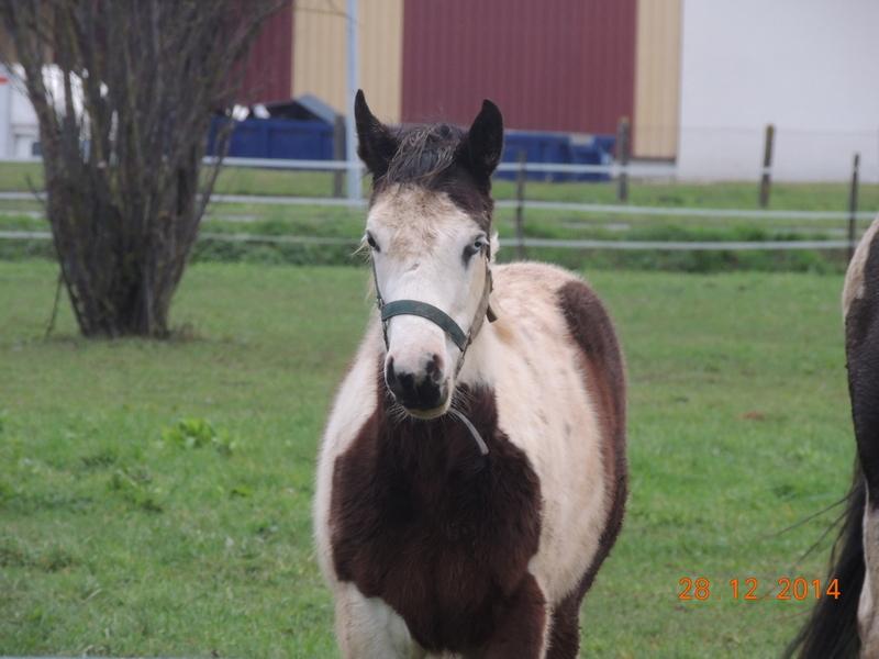 Les chevaux de l'Appaloosa IJ Farm - Page 4 01214