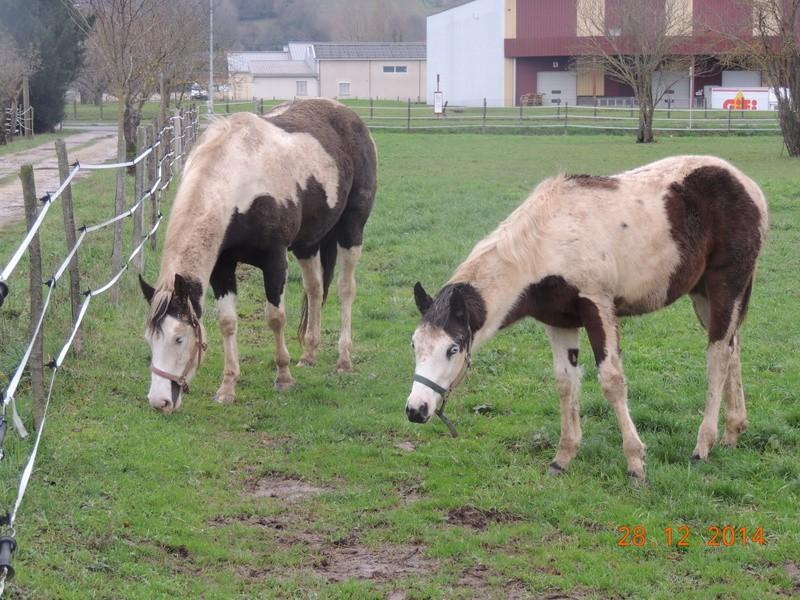 Les chevaux de l'Appaloosa IJ Farm - Page 4 01412