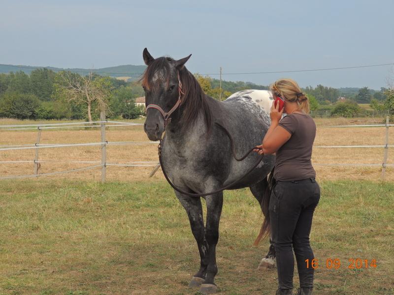 Les chevaux de l'Appaloosa IJ Farm - Page 3 01511