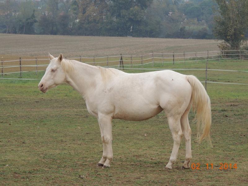 Les chevaux de l'Appaloosa IJ Farm - Page 4 01512