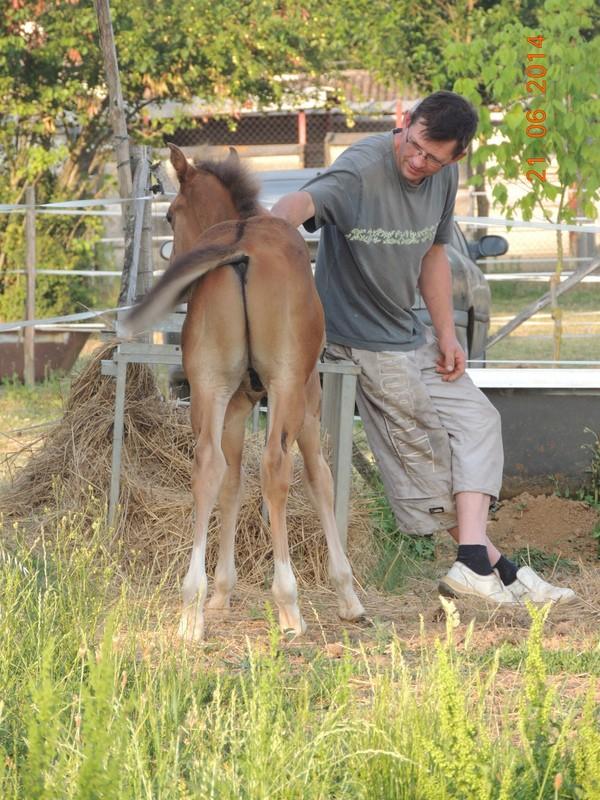 Les poulains né à l'Appaloosa IJ Farm - Page 2 01610