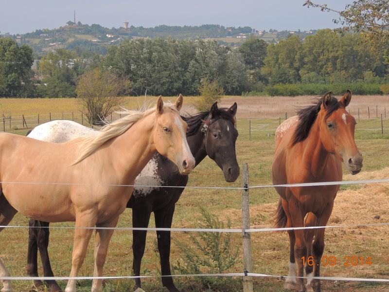Les chevaux de l'Appaloosa IJ Farm - Page 3 01612