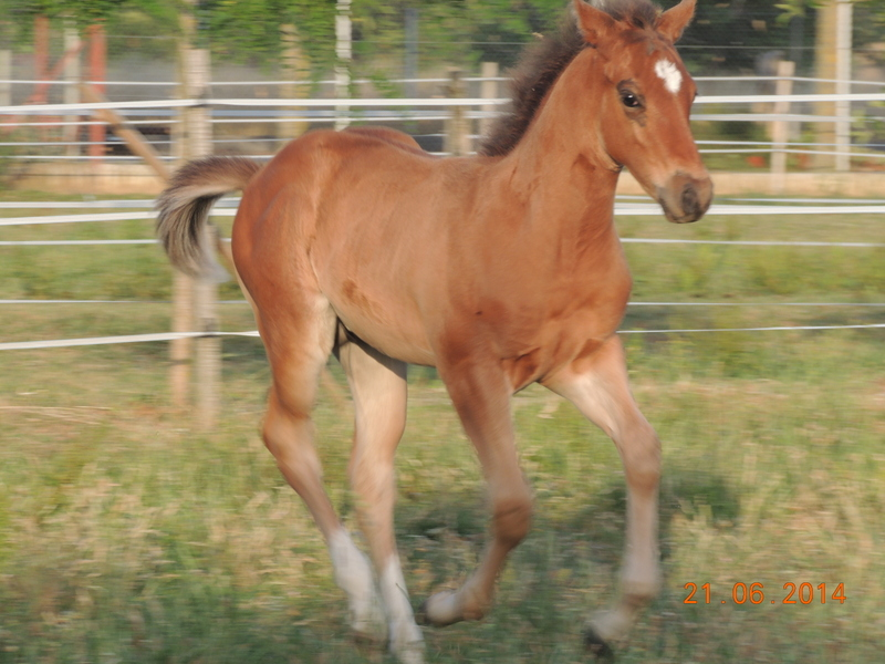 Les poulains né à l'Appaloosa IJ Farm - Page 2 01810