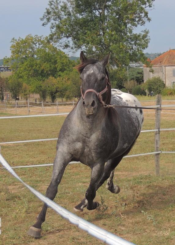 Les chevaux de l'Appaloosa IJ Farm - Page 3 01813