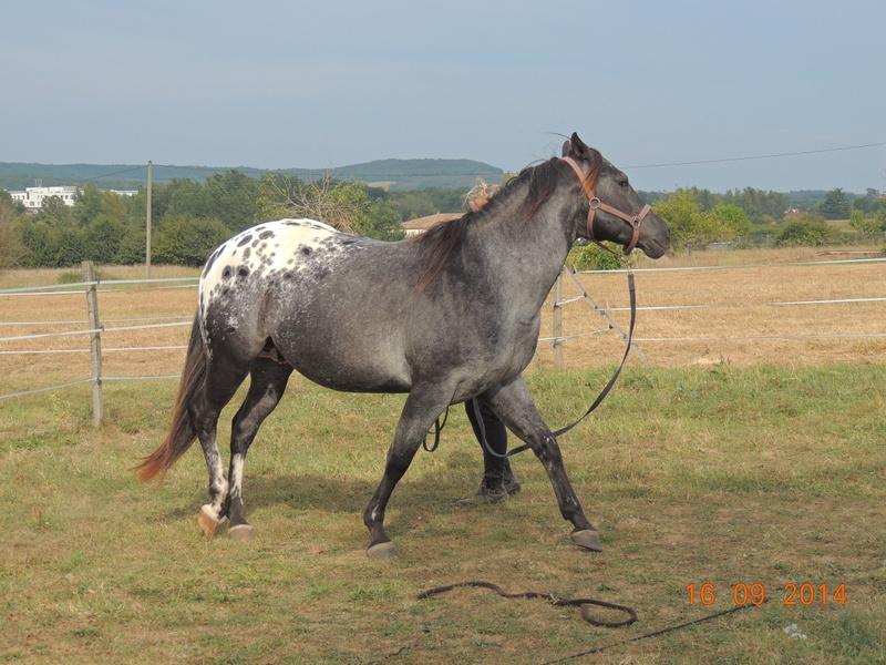 Les chevaux de l'Appaloosa IJ Farm - Page 3 01911